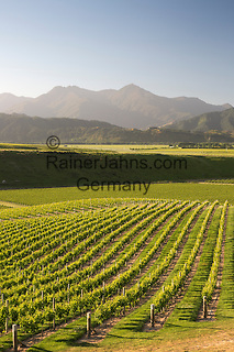 New Zealand, South Island, Marlborough Region, Renwick near Blenheim: Vineyards along Delta Lake Heights Road   Neuseeland, Suedinsel, Marlborough Region, Renwick bei Blenheim: Weinberge an der Delta Lake Heights Road