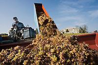 Europe/France/Midi-Pyrénées/81/Tarn/ Cahuzac-sur-Vère: Vendanges manuelles à Montels  au Domaine de Tres Cantous chez Robert et Bernard Plageoles viticulteurs