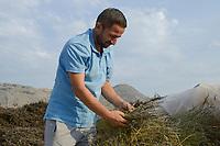 ALBANIA, Shkodra, farming of herbal and medical plants, Lavender field / ALBANIEN, Shkoder, Anbau von Heil- und Gewuerzpflanzen, Lavendel Feld von Firma Agro-Map, Farmer Ilir Gjolaj