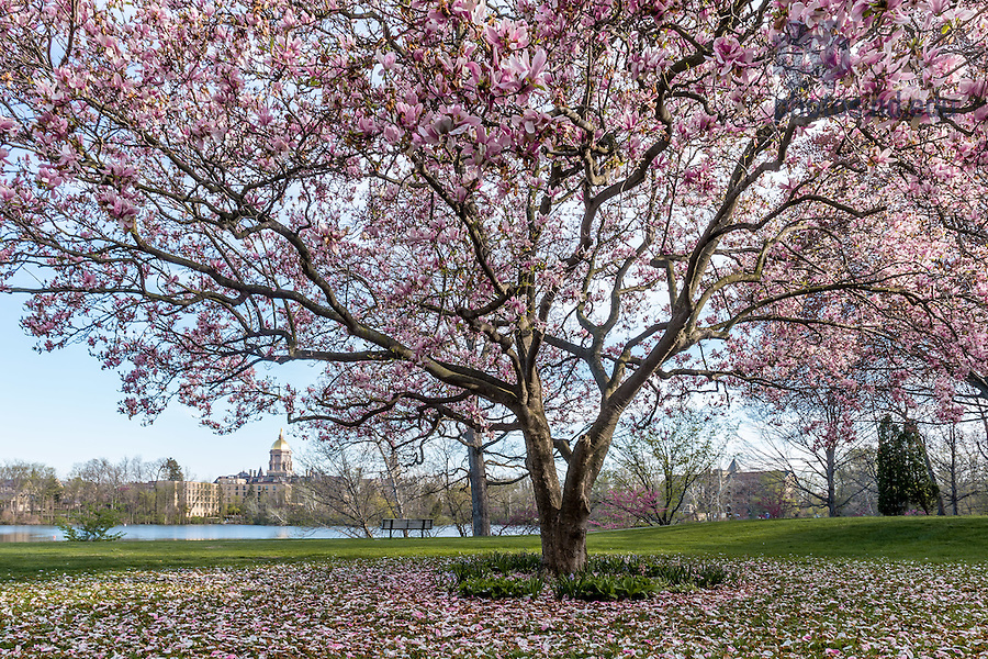 May 1, 2015; St. Joseph Lake in Spring. (Photo by Matt Cashore/University of Notre Dame)