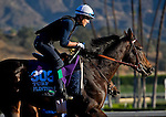 October 29, 2014:  Flintshire, trained by Andre Fabre, exercises in preparation for the Longines Breeders' Cup Turf at Santa Anita Race Course in Arcadia, California on October 29, 2014. John Voorhees/ESW/CSM