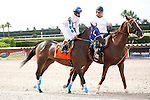 Sinister Tale on post parade for The Azalea Stakes (G3), Calder Race Course, Miami Gardens Florida. 07-07-2012.  Arron Haggart/Eclipse Sportswire.