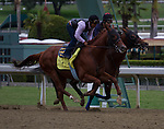 Capital Account (inside) and Coil (outside) working for trainer Bob Baffert at Santa Anita Park in Arcadia California