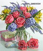 Alfredo, FLOWERS, BLUMEN, FLORES, photos+++++,BRTOLMN29594,#f#, EVERYDAY ,rose,roses