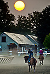 SARATOGA SPRINGS, NY - AUG 26: Horses exercise on the Oklahoma Training Track just after sunrise on the morning of Travers Stakes Day at Saratoga Race Course o August 26, 2017 in Saratoga Springs, New York (Photo by Scott Serio/Eclipse Sportswire/Getty Images)