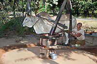Myanmar, Burma, near Bagan.  Peanut Farmer Grinding Peanut Paste to Produce Peanut Oil.