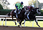 October 16, 2015:  Thrilled (outside) and Azar (inside) work in preparation for the Breeder's Cup.   Candice Chavez/ESW/CSM