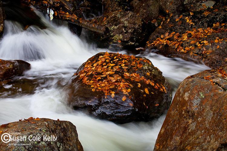 The Ellis River at Glen Ellis Falls, White Mountain National Forest, NH, USA