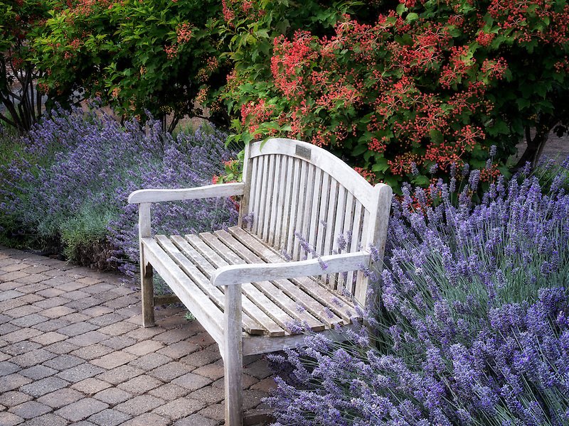 Bench and flowers, mostly lavender. Oregon Garden. Silverton, Oregon