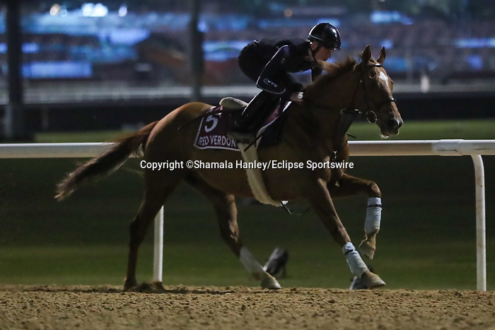 March 25,2021: Gold Cup contender Red Verdon trains on the track at Meydan Racecourse for trainer Ed Dunlop, Dubai, UAE.<br /> Shamela Hanley/Eclipse Sportswire/CSM