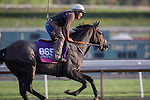OCT 27 2014:Sunset Glow, trained by Wesley Ward, exercises in preparation for the Breeders' Cup Juvenile Fillies at Santa Anita Race Course in Arcadia, California on October 27, 2014. Kazushi Ishida/ESW/CSM