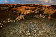 Circles and dots, the oldest petroglyphs, which may be the depository of the piko or navel cord of a baby for worshipping Pu`uloa or long life, Pu`u Loa, Puu Loa, Pu`uloa or Puuloa Petroglyph Trail, Hawaii Volcanoes National Park, Kilauea, Big Island, Hawaii