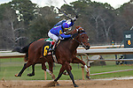 HOT SPRINGS, AR - JANUARY 18:  Discreetness #6, ridden by Jon Court, coming down the stretch while holding off Gordy Florida #5 in the Smarty Jones Stakes at Oaklawn Park on January 18, 2016 in Hot Springs, Arkansas. (Photo by Justin Manning)