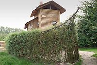 Aus Weidenstecklingen, Weide, Weiden, Salix wurde ein lebender Schiffsrumpf gebaut, Spielplatz, Kopfweide, Kopfweiden