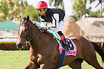 HALLANDALE BEACH, FL - MARCH 04: #8 Celestine with Jose Ortiz up after winning the Sand Spring Stakes at Gulfstream Park. (Photo by Arron Haggart/Eclipse Sportswire/Getty Images)