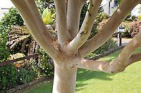 Suburban Tree 2011