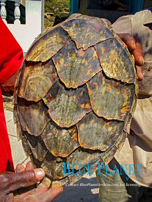 turtle shell, Dominica, Caribbean, Atlantic