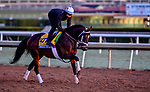 October 30, 2019: Breeders' Cup Classic entrant Seeking the Soul, trained by Dallas Stewart, exercises in preparation for the Breeders' Cup World Championships at Santa Anita Park in Arcadia, California on October 30, 2019. Scott Serio/Eclipse Sportswire/Breeders' Cup/CSM