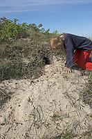 Mädchen, Kind am Kaninchenbau, Eingang zum unterirdischen Bau, Europäisches Wildkaninchen, Wild-Kaninchen, Kaninchen, Oryctolagus cuniculus, Old World rabbit, Lapin de garenne
