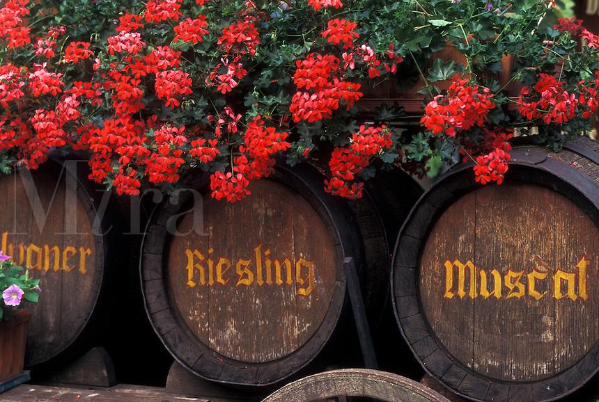 France, Alsace, Bas-Rhin, Europe, wine region, Red geraniums decorate large wooden wine barrels in the wine region of Alsace.