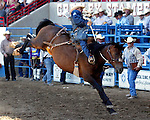 Billy Etbauer scores a 77 point ride on the Buetler & Son Rodeo Company bronc Paoli during the Cowboy Christmas run July 29th at the Greeley Independence Stampede Rodeo in Greeley, Colorado.