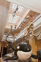 Europe/France/Aquitaine/64/Pyrénées-Atlantiques/Pays-Basque/Biarritz: Le Musée de la Mer - Galerie  des  Cétacés   [Non destiné à un usage publicitaire - Not intended for an advertising use]