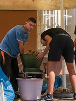 Keltern von Trauben beim Traubenfest, Vrsac, Vojvodina, Serbien, Europa<br /> pressing of wine at the wine-festival, Vrsac, Vojvodina, Serbia, Europe