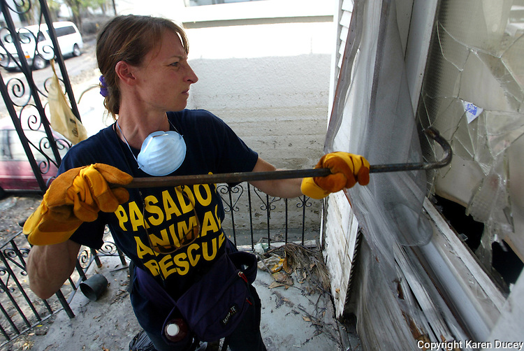 Pasados Safe Haven volunteer Dana Bridges from Monroe, WA breaks into a house with a Save Our Pets sticker on the door on September 16, 2005.  Bridges is a professional equine vet.  Pasados volunteers comb neighborhoods abandoned after hurricane Katrina ripped through New Orleans last month searching for abandoned animals. (photo © Karen Ducey)
