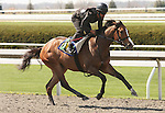 07 April 2011.  Hip #18 CALLMENANCY  Political Force - Mayan Milagra filly consigned by Kirkwood Stables.