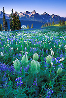 Wildflowers and Tatoosh Range, Mount Rainier National Park, Washington