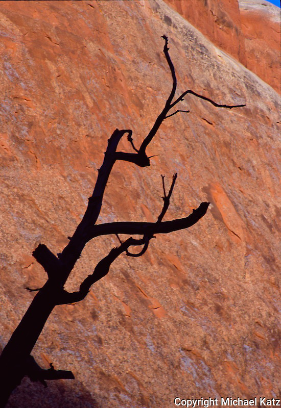 Silhouette of snag on sandstone, Arches NP