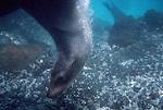 Galapagos Islands, Sea Lions, Ecuador, South America,