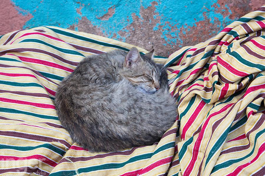 Sleeping cat near Jamaa el Fna, Marrakech, Morocco