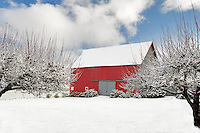 Red barn in snow. Near McMinville. Oregon
