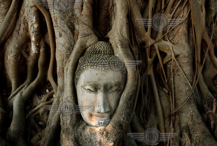 Buddha head encircled by a tree at Wat Phra Mahathat. Ayutthaya was the most powerful kingdom in Siam in the mid-14th century. Its end came after years of conflict, when the capital was sacked by the Burmese in 1767. Today, Ayutthaya Historical Park is a UNESCO World Heritage Site.