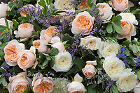Mixed pastel roses Rosa in peach orange salmon tones and creamy white, English roses