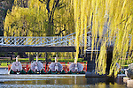 Swan boats in springtime in the Boston Public Garden, Boston, MA, USA
