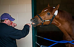 DEL MAR, CA - OCTOBER 29: Trainer Chad Summers shadow boxes with his graded stakes winning and Breeders' Cup placed colt Mind Your Biscuits after his workout at Del Mar Thoroughbred Club on October 29, 2017 in Del Mar, California. (Photo by Alex Evers/Eclipse Sportswire/Breeders Cup)