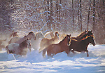 """Open-range Horses<br /> Inside message: Peace on Earth<br /> 5 x 7"""" holiday card with white envelope.<br /> Printed on recycled paper with soy based inks. Watermark does not appear on product."""