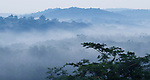 Mist over tropical rainforest, Kibale National Park, western Uganda