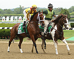 June 5 2015: Cavorting with Irad Ortiz, Jr. win the 2nd running of the Jersey Girl Stakes, for 3-year old fillies, going 6 furlongs at Belmont Park.  Trainer Kiaran McLaughlin. Owner Stonestreet Stables. Sue Kawczynski/ESW/CSM