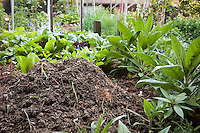 Compost pile among plants; Elvin Bishop garden