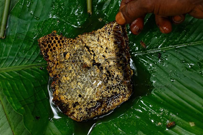 """A """"Bouy"""", honeycomb, brought back to the camp in a leaf.///Une galette de miel «Bouy» rapportée au campement dans une feuille."""