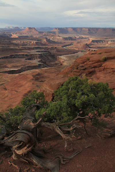 Green River overlook, Canyonlands National Park, Utah.