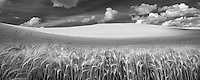 Clouds and wheat field. The Palouse, Washington