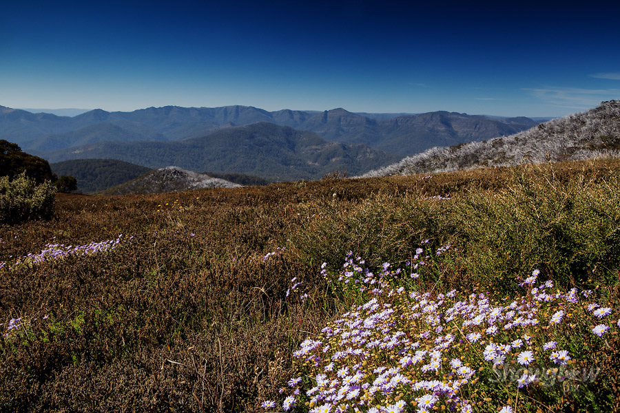 Image Ref: HC135<br /> Location: Clear Hills Track, Mt Buller<br /> Date: 22 March, 2015