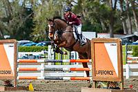 NZL-Shelley Bridgeman rdes Oaks Vendetta. Class: 24 - Dunstan Horsefeeds Amateur Rider Series. 2020 NZL-Fiber Fresh GP SJ Show Spring Series Show. Woodhill Sands. Sunday 20 September. Copyright Photo: Libby Law Photography