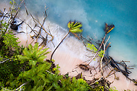 Fallen trees in the shallows of Funafuti atoll, Tuvalu. Erosion of land is an inevitable consequence of life in a coral atoll nation. As sea levels rise and increased threats from storm surges and extreme weather events occur, the land of Tuvalu will increasingly become fragile and prone to erosion. March, 2019.
