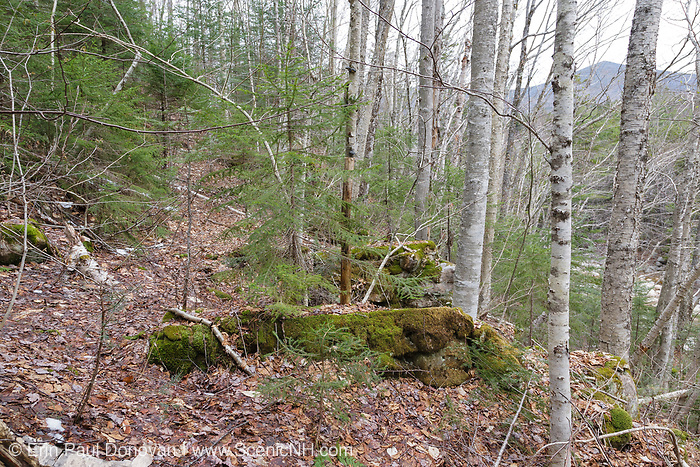 Remnants of a dry trestle along the abandoned East Branch & Lincoln Railroad (1893-1948) in the Pemigewasset Wilderness of Lincoln, New Hampshire. This trestle was used to cross a steep hillside along the Upper East Branch of the railroad, below logging camp 18.