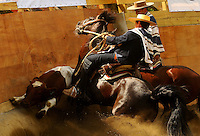 Chilean rodeo, the horsemen are called huasos, equivalent of the cowboy